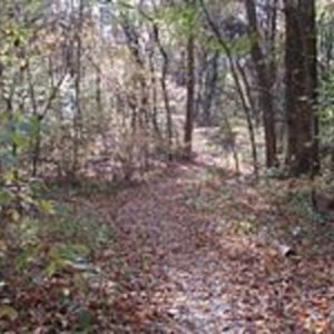 Overton_Park_Old_Forest_Trail_Memphis_1.jpg